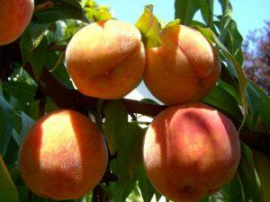 energizing-peach-smoothie