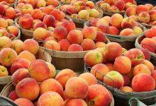 peachsicle-smoothie